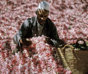 flowers and morocco image