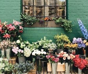 flowers, beautiful, and window image