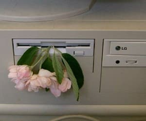 flowers, pale, and theme image