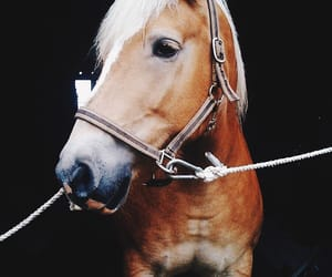 horse, dressage, and stable image