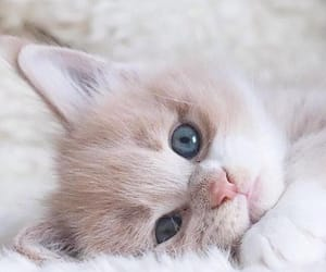 animal, fluffy, and cat image