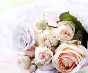 rose and beautiful image