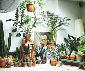 cacti, houseplants, and my plants image
