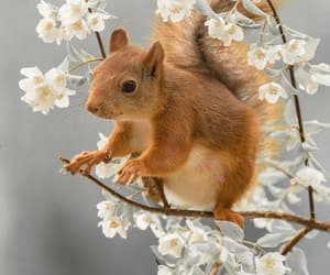 Animales, belleza, and ardilla image