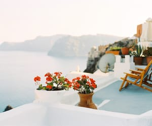 nature, flowers, and Greece image