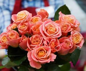 blossom, bouquet, and fleur image