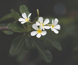 blossom, brown, and fleur image