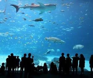 aquario do rio image