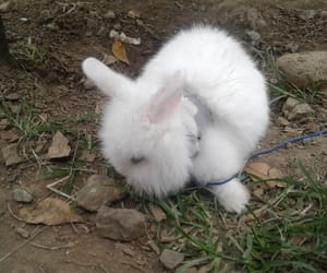 bunny, furry, and natural image