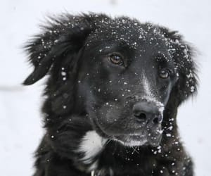 animals, snow, and cute image