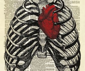 heart, tumblr, and love image