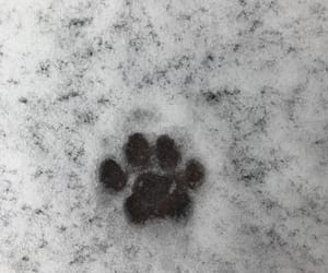 paws, snow, and cat cute image