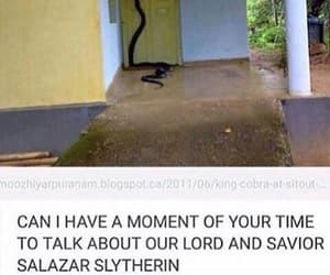 harry potter, funny, and snake image