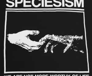 animal liberation, animal rights, and animals image