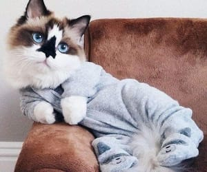 cats, furries, and animals image