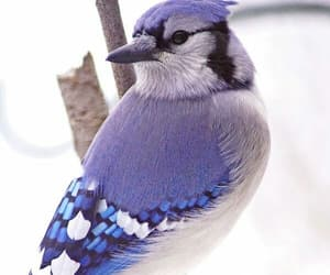 animal, bird, and blue image