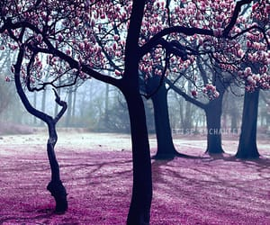 art, beautiful, and blossom image