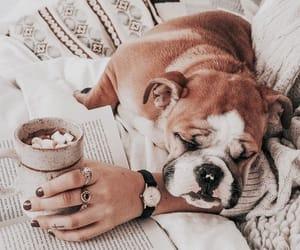 animal, dog, and cozy image