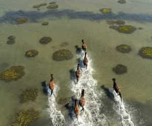 horse, animal, and water image