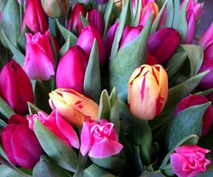 blumen, flowers, and tulip image