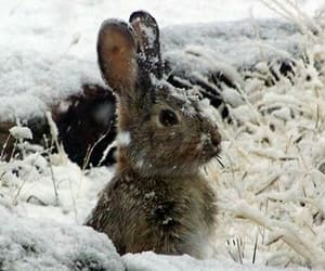 cute, animal, and winter image