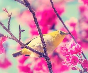 amazing, animal, and bird image