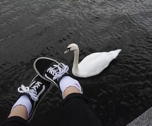 aesthetic, black, and Swan image