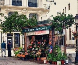 Algeria, flowers, and alger image