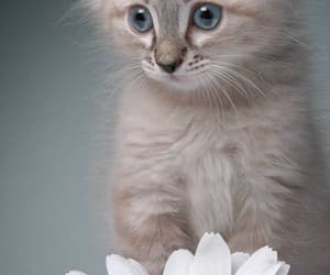 cat, flower, and eyes image