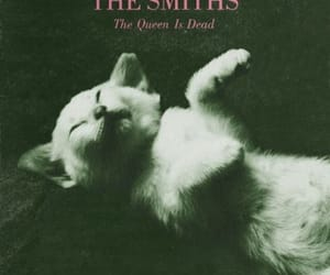 cat, the smiths, and kitten image