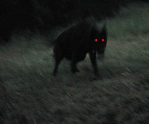 creepy, dog, and goth image