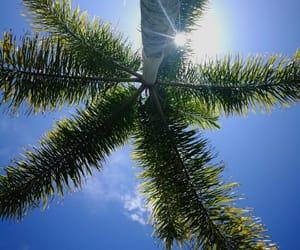 tree, australia, and beautiful image