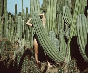 cactus, green, and indie image