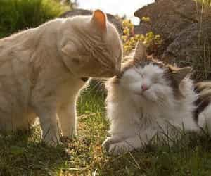 cats, kiss, and cute image