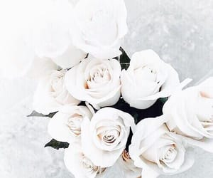 flower, rose, and flowers image