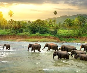 blue, calm, and elephant image