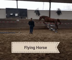 equestrian, gif, and horses image