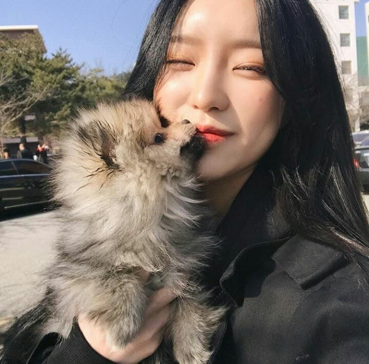 aesthetic, korea, and puppy image