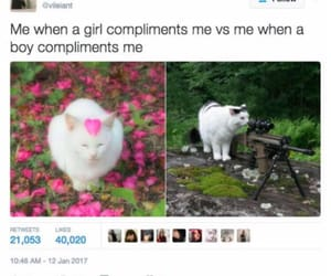 boys, cats, and flower image