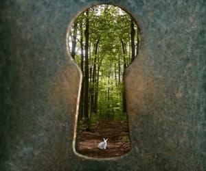 alice in wonderland, door, and rabbit image
