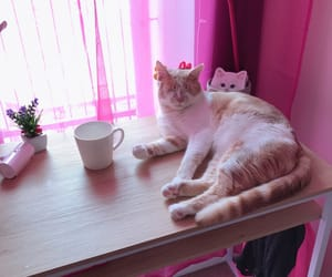cat, pink, and ginger image