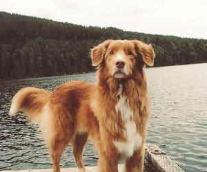 dog, animal, and cats image