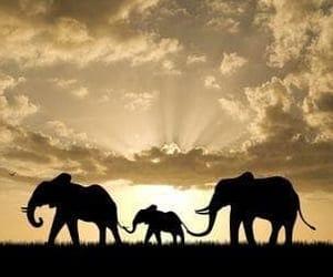 animal, elephant, and family image