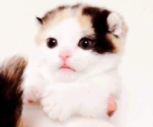 cat, gif, and kawaii image