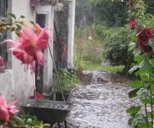 rain, nature, and flowers image