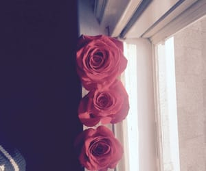 beautiful, pretty, and red rose image