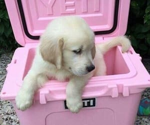 dog, pink, and puppy image