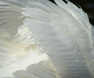 wings, feather, and angel image