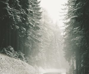forest, latvia, and winterwonderland image