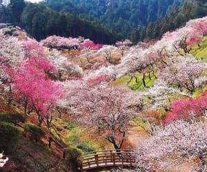 nature and japan image